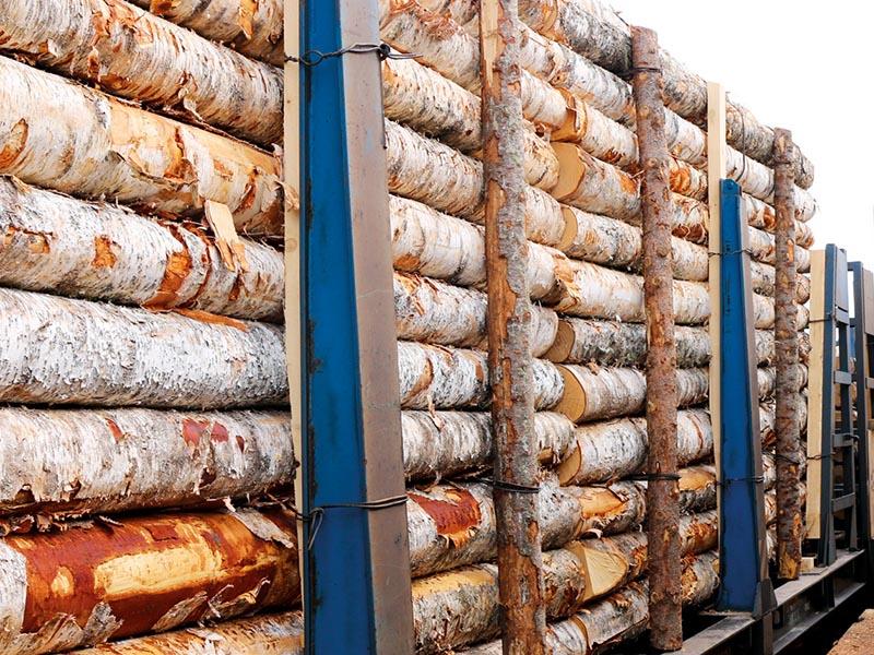 Мировые рынки древесины: куда везти российский лес?